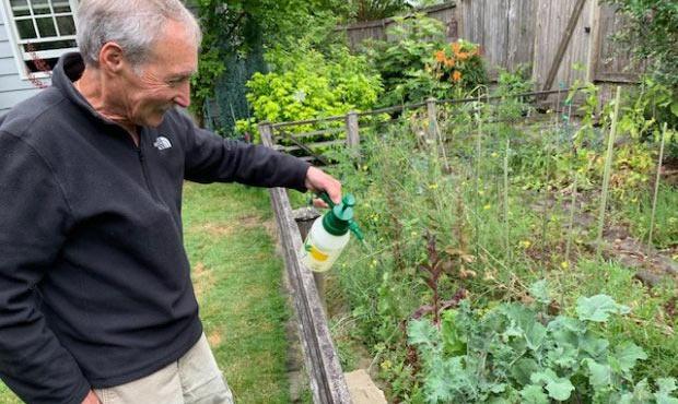 rabbits, Ciscoe, gardening...